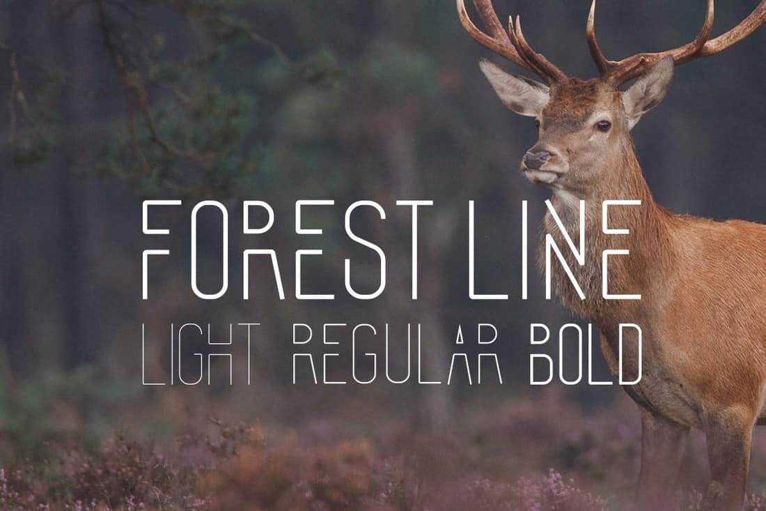 Forest Line - Creative Condensed Font