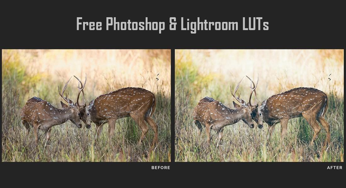 LUT Profesional Gratis untuk Photoshop Lightroom